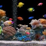 Aquarium-Wallpaper-146